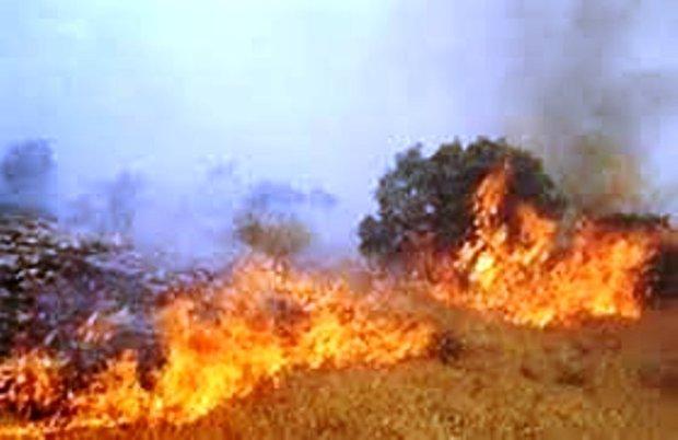 پنج هکتار از مراتع و جنگل های بانه طعمه حریق شد