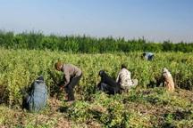 100درصد تعهد اشتغال کشاورزی قزوین محقق شد