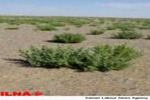 عملیات بیابانزدایی در 13 هزار هکتار از اراضی جنوب غرب پایتخت  کنترل کانونهای اصلی گردوغبار