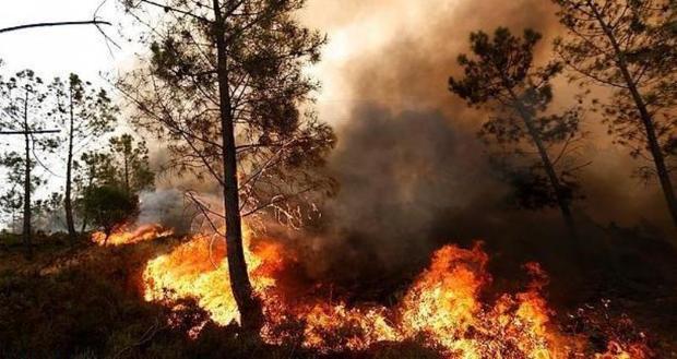 آتش به 6 هکتار از پارک ملی کرخه خسارت زد