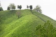 کمک بلاعوض دولت برای توسعه آبیاری تحت فشار در باغهای چای