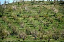 پرداخت یارانه خرید نهال های سیاه ریشه در زمین های  شیب دار مازندران