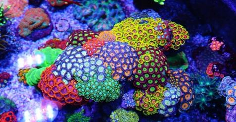 آب شیرین کنها از عوامل نابودکننده مرجانها