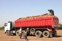 تراتزیت  474 هزار تن چغندر قند ازخوزستان