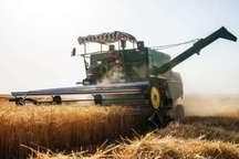 پیش بینی خرید حدود 30 هزارتن گندم و جو در البرز