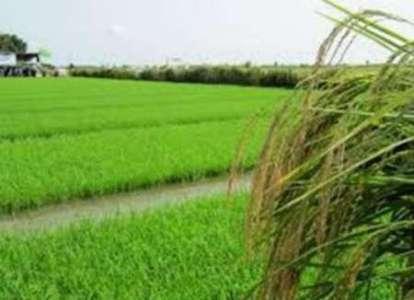 بهبود 5 میلیارد دلاری تراز تجاری بخش کشاورزی کشور
