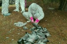 زمان دقیق تعیین علت مرگ کبوتران وحشی اسلام آبادغرب مشخص نیست
