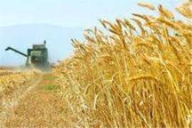 فردیس 46 هزار تن محصولات کشاورزی روانه بازار کرد
