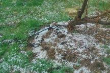 بارش تگرگ کشاورزان ارومیهای را غافلگیر کرد