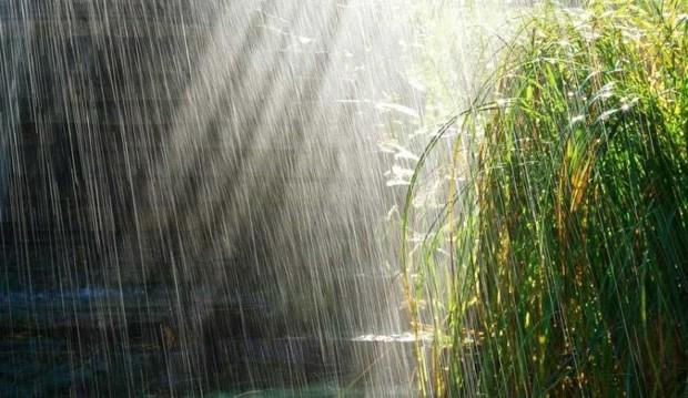 باران کشتزار ها و مراتع خراسان شمالی را سیراب کرد