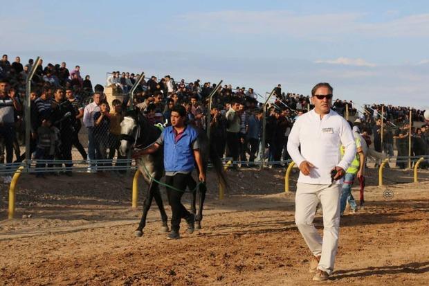 قزوین میزبان مسابقات سه روزه سوارکاری شد