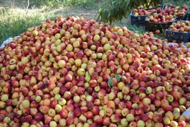 بخش کشاورزی پارس آباد نیازمند صنایع تبدیلی است