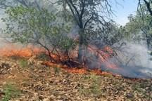 کاهش 48 درصدی آتش سوزی در عرصه های طبیعی استان ایلام