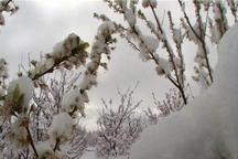 برف 736 میلیارد تومان خسارت به بخش کشاورزی البرز وارد کرد