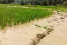 سیل سه هزار و 450 میلیارد ریال به بخش کشاورزی مرکزی خسارت زد
