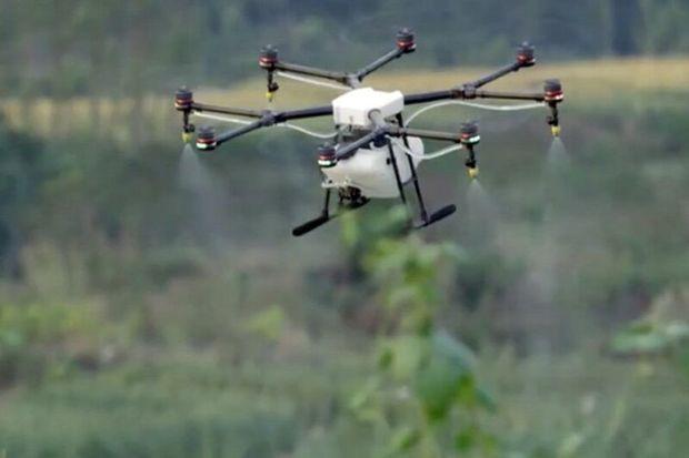 سمپاشی آزمایشی زمینهای کشاورزی در هشترود با پهباد