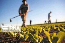 ایجاد ۳۱۴ فرصت شغلی در حوزه کشاورزی قیر و کارزین