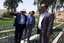 تولید 200 هزار اصله نهال گرمسیری در نهالستان پلدختر