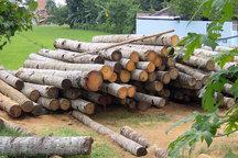 ورود مدعی العموم به منظور ساماندهی و ایمن سازی فعالیت درودگران و چوب فروشان اتوبان تهران-کرج
