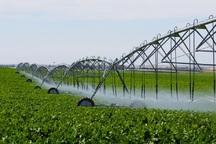 میزان بهره وری آب در آبیاری نوین تا 84 درصد افزایش می یابد
