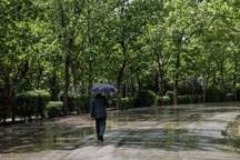 باران بهاری شالیکاران آستارا را غافلگیر کرد