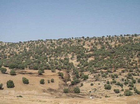 100 هکتار زمین ملی از چنگ متصرفان در خوی خارج شد