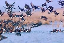 شکار پرندگان آبزی و کنار آبزی در لرستان ممنوع است