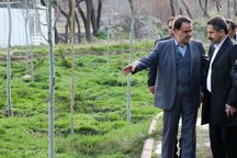 20 بوستان محله ای در تبریز ایجاد می شود