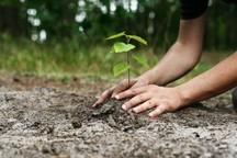 فرهنگ درختکاری ترویج شود