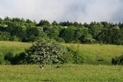 قرقبانان فصلی از جنگل های پاسارگاد حراست می کنند