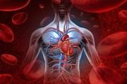 بهترین ویتامین ها و مکمل ها برای افزایش جریان خون