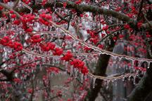 سرمازدگی 3372 میلیارد ریال به محصولات کشاورزی مرکزی خسارت زد