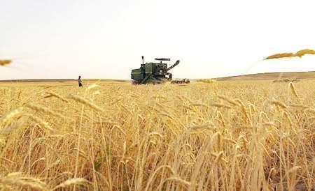 40 درصد از وجوه گندم کاران خراسان شمالی پرداخت شد