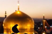 بررسی «منطق قرآن در بیانات امام رضا(ع)»