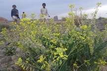 روستاهای خاش مقصد طبیعت گردان سیستان و بلوچستان