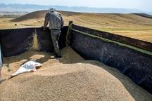 300تن جو بین عشایر سیلزده دوره چگنی توزیع شد