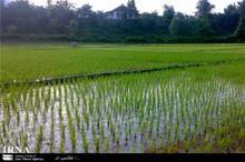 کشاورزان لرستانی متناسب با ظرفیت آبی منطقه اقدام به کشت کنند