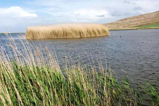 کانی برازان سرزنده ترین تالاب حوضه دریاچه ارومیه