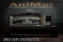 جایزه بهترین فیلم کوتاه جشنواره آوانکای پرتقال به «حیوان» رسید