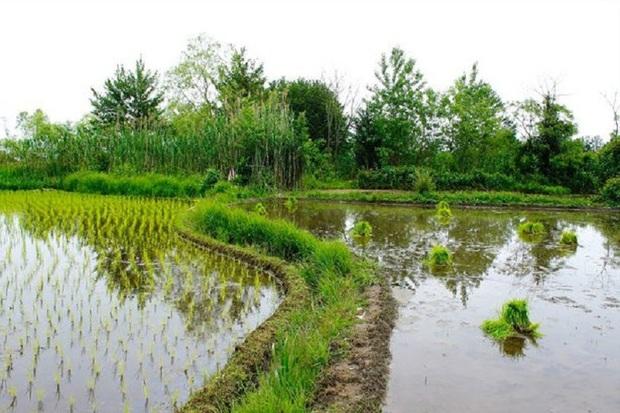 باران کشاورزان آستارا را خوشحال کرد