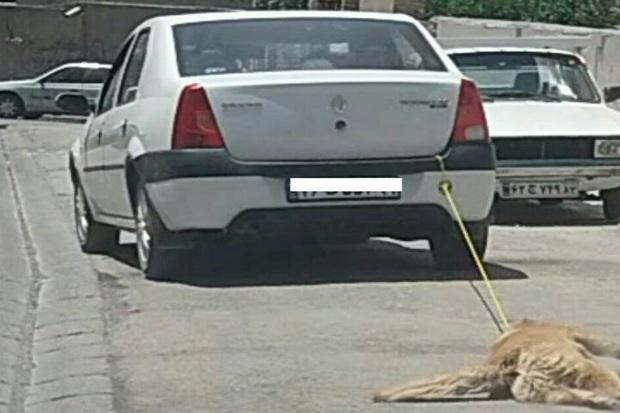 راننده سگ آزار در اردبیل تحت تعقیب قضایی قرار گرفت