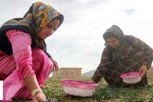 هفت صندوق اعتباری خرد زنان روستایی در اردبیل ایجاد شد