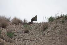 یک قلاده گربه وحشی در طبیعت رها شد