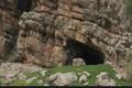 فسیل انسانی یافت شده در غار کلدر خرم آباد رونمایی می شود