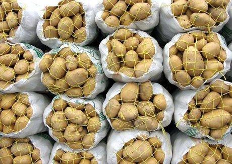 وزارت کشاورزی: میزان نیترات موجود در سیبزمینی مجاز است