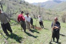 طرح توسعه جنگل در 100 هکتار اراضی ملی مریوان آغاز شد