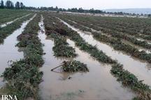سیلاب 6 میلیارد ریال به کشاورزی سبزوار خسارت زد