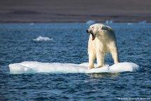 نقش مناطق حفاظت شده دریایی در کاهش تاثیرات تغییرات اقلیمی