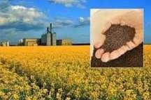 پیش بینی برداشت 4000 تن محصول کلزا از مزارع جنوب کرمان