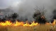 خشکی هایی که طبیعت را می سوزاند